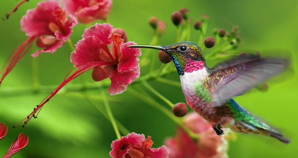 Hummingbird with Flower representing Vata Dosha