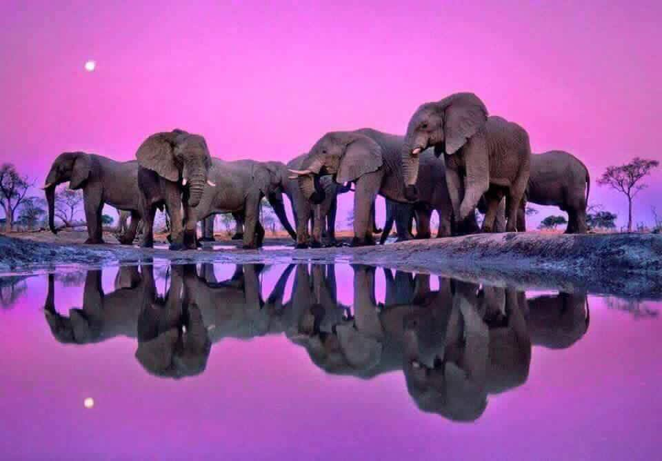herd of elephants reflected in a still pond with purple skies, representing kapha dosha